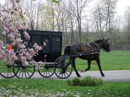 Amish buggy traveling down the road.