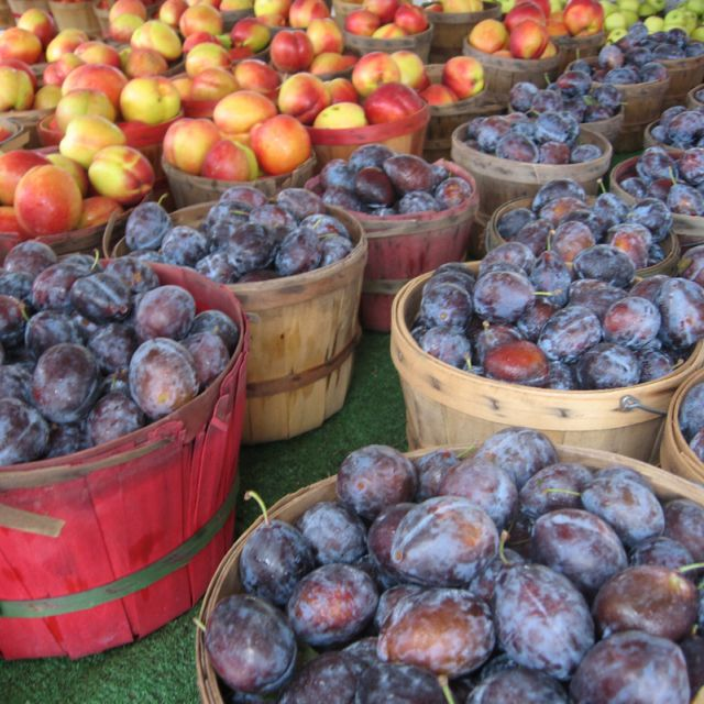 Fresh Plums for sale at Shipshewana Flea Market