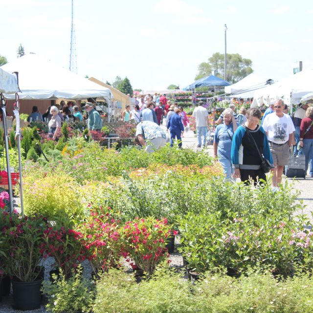 Landscaping Bushes with view of Shipshewana Flea Market