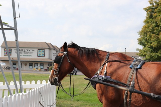 Exclusive Tour of An Amish Buggy